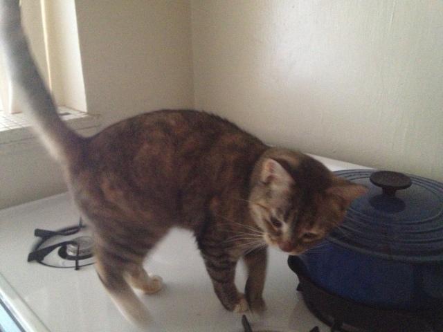 Sabrina's cat
